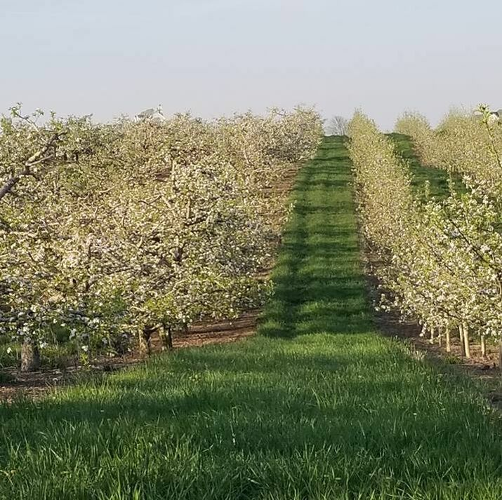 Timber Ridge Fruit Farm Orchards